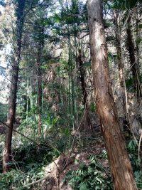 鬱蒼とした林