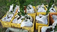 土嚢袋栽培