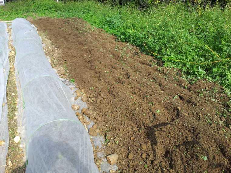 耕して平らに均します。