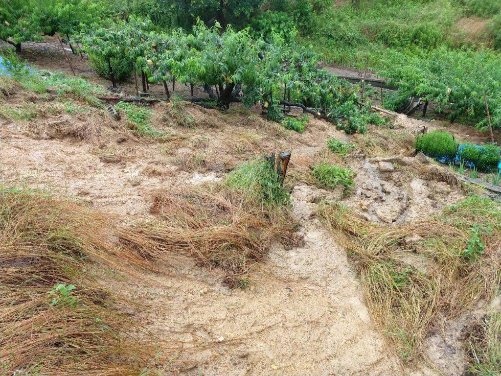 隣の畑に被害